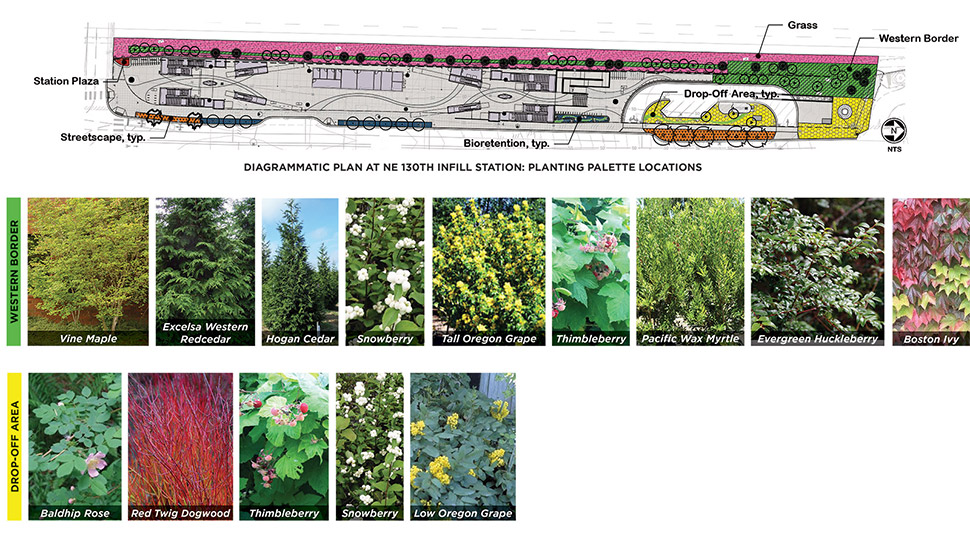 Graphic featuring western border and drop-off area samples of plants. The top of the graphic features a diagrammatic plan of the Northeast 130th Street Station with the planting palette locations. Click image link to view a full-size JPEG.